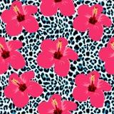 Tropischer nahtloser Hintergrund mit Hibiscusblumen und Leopardmuster Stockbilder