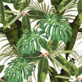 Tropischer nahtloser Musterhintergrund mit hellen Palme monstera Blättern, Ficus, Dschungelblatt