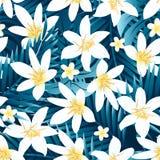 Tropischer nahtloser Rüttler des weißen und gelben Hibiscusblumenmusters Stockbilder