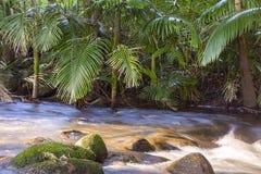 Tropischer Nebenfluss mit Palmen in Nord-Queensland lizenzfreie stockfotos
