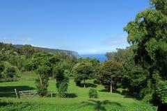 Tropischer Obstgarten Hawaiis Lizenzfreies Stockbild