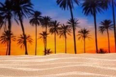 Tropischer Palme-Sonnenunterganghimmel auf Sanddünestrand Stockbild