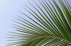 Tropischer Palmenurlaub lizenzfreie stockbilder
