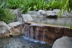 Tropischer Park Stockbild