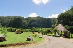 Tropischer Park Lizenzfreies Stockbild