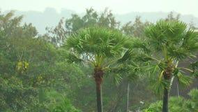 Tropischer Regen stock video footage
