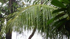 Tropischer Regen stock footage