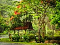 Tropischer Regenguß Stockbild