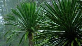 Tropischer Regenguß draußen stock footage