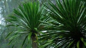 Tropischer Regenguß draußen stock video