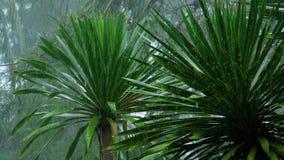 Tropischer Regenguß draußen stock video footage