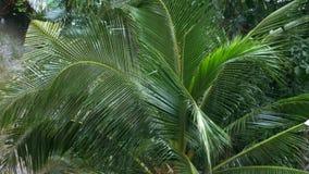 Tropischer Regensturm im Dschungel gegen den Hintergrund der Palme stock video