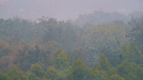 Tropischer Regensturm im Dschungel gegen den Hintergrund eines grünen Waldes stock video