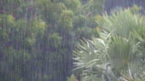 Tropischer Regensturm im Dschungel gegen den Hintergrund eines grünen Waldes mit einer Palme stock video