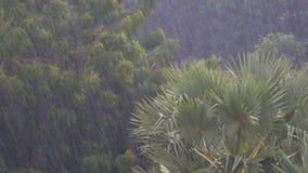 Tropischer Regensturm im Dschungel gegen den Hintergrund eines grünen Waldes mit einer Palme stock video footage
