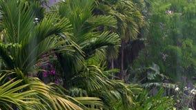 Tropischer Regensturm oder Gewitter in einer grünen Dschungelumwelt mit Palmen stock video footage
