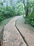 Tropischer Regenwald stockfoto