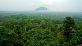 Tropischer Regenwald Lizenzfreies Stockfoto