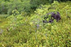 Tropischer Regenwald in Seychellen Stockfotografie