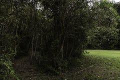 Tropischer Regenwald von Kolumbien lizenzfreies stockfoto