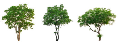 Tropischer Sammlungssatz des Baums lokalisiert auf Weiß Lizenzfreie Stockbilder
