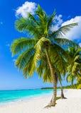 Tropischer sandiger Strand mit exotischen Palmen Stockbild