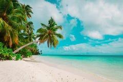 Tropischer Sandstrand mit Palmen Stockbild