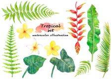 Tropischer Satz des Aquarells mit Blättern und schönen Blumen vektor abbildung