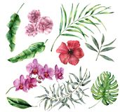 Tropischer Satz des Aquarells mit Blumen und Blättern Handgemalte Palme, monstera, Hibiscus, Orchidee, Oleander, Eukalyptus lizenzfreie abbildung