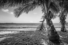 Tropischer Schwarzweiss-Strand Lizenzfreie Stockfotografie