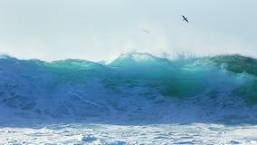 Tropischer Seevogel steigt über Rohrleitungsbrandung an stockbild
