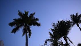 Tropischer Sonnenaufgang stock video