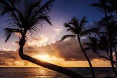 Tropischer Sonnenaufgang oder Sonnenuntergang am Palm Beach Stockfotografie