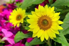 Tropischer Sonnenblumenabschluß oben lizenzfreie stockfotografie