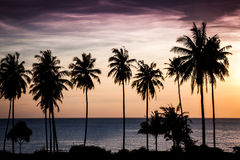 Tropischer Sonnenuntergang über Meer mit Palmen Stockfoto