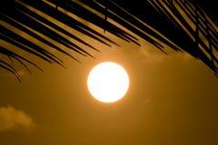 Tropischer Sonnenuntergang Lizenzfreie Stockfotografie