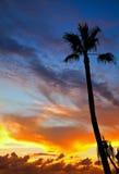 Tropischer Sonnenuntergang Lizenzfreie Stockbilder