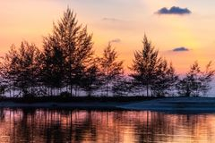Tropischer Sonnenuntergang hinter filao Bäumen stockfotos