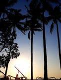 Tropischer Sonnenuntergang mit Palmen im Schattenbild Stockbild