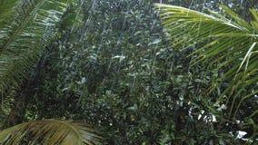 Tropischer starker Regen im asiatischen Regenwald stock video