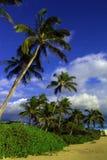 Tropischer Strand Stockbilder