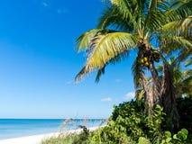 Tropischer Strand Lizenzfreies Stockfoto