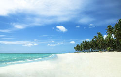 Tropischer Strand in Brasilien Lizenzfreie Stockfotos