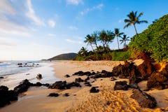 Tropischer Strand Hawaii Stockbild
