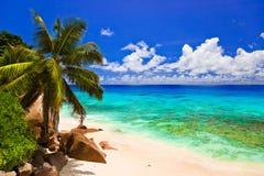 Tropischer Strand am Insel La Digue, Seychellen lizenzfreie stockfotografie