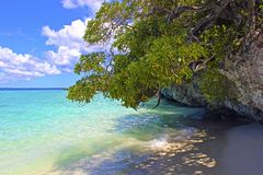 Tropischer Strand in Lifou, Neukaledonien Lizenzfreie Stockfotografie
