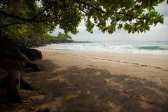 Tropischer Strand mit Bäumen Stockfotografie