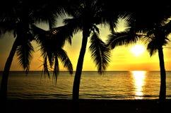 Tropischer Strand mit Kokosnussbaum lizenzfreie stockfotografie