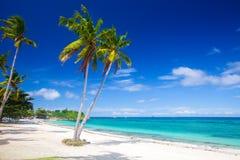 Tropischer Strand mit Kokosnusspalme Lizenzfreies Stockbild