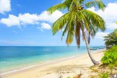 Tropischer Strand mit Kokosnusspalme stockfotografie